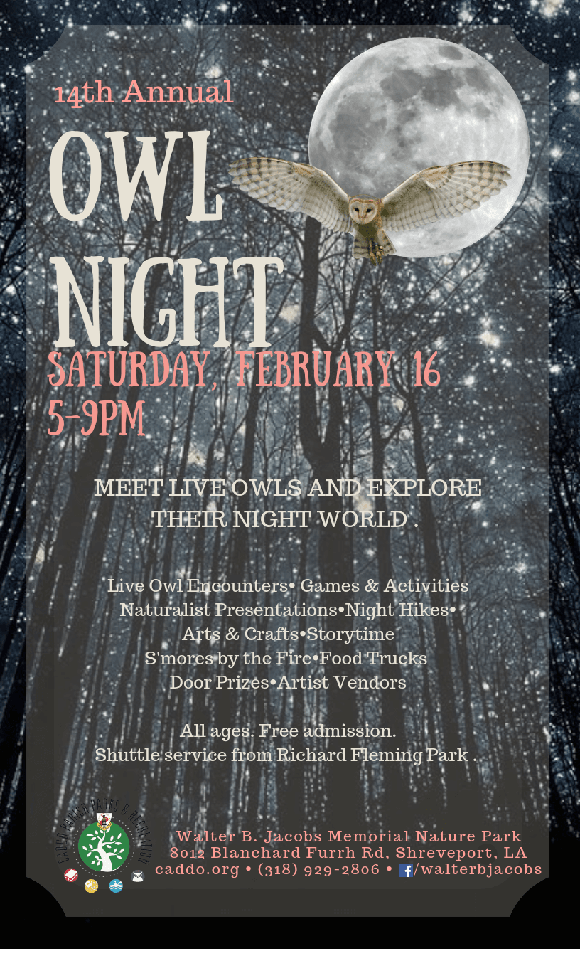 Owl Night Flyer 2019