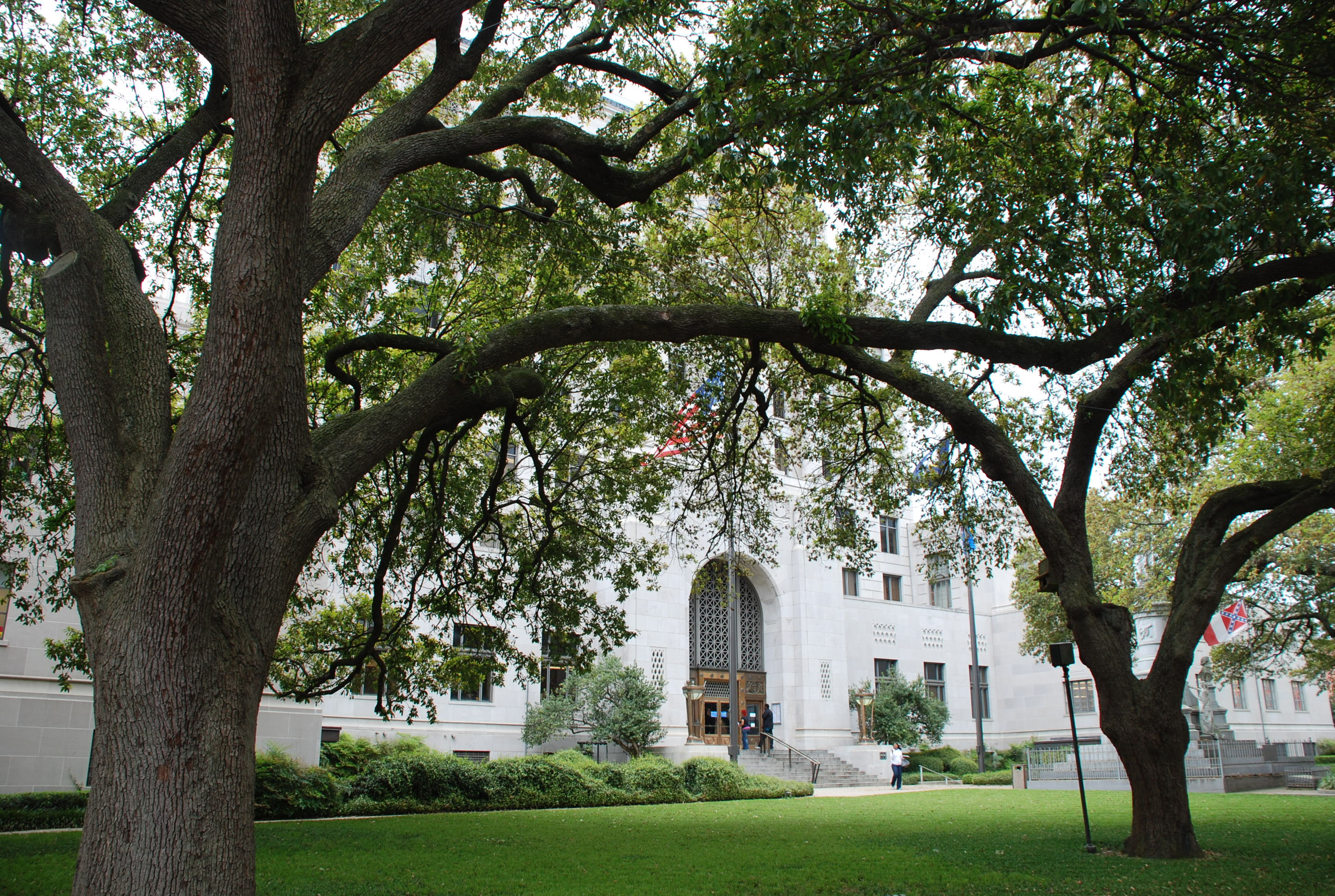 Courthouse Trees